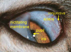 cat eye structure squinting
