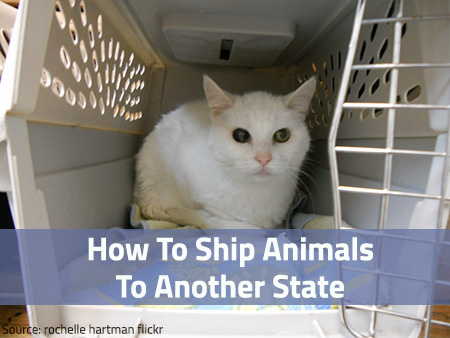 ship-animals-to-another-state