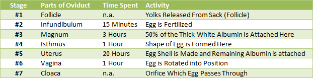 Overview of Egg Laying Process