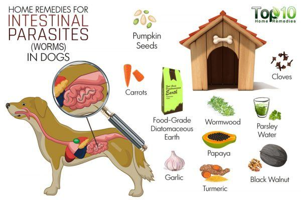 home remedies for intestinal worms in dogs
